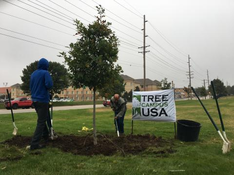 Grounds staff planting a tree