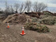 Photo of a pile of clean brush and tree limbs
